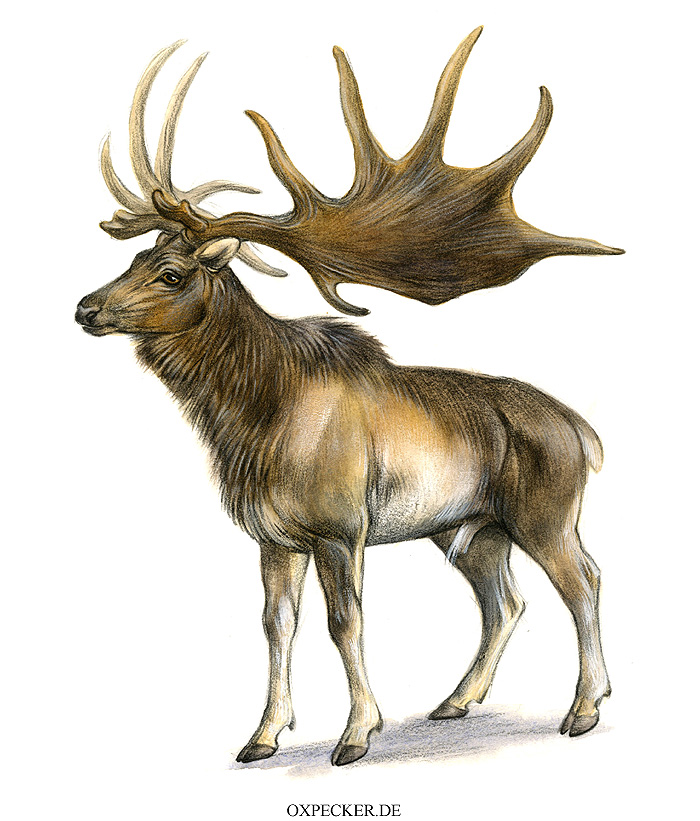 Megaloceros by Pip