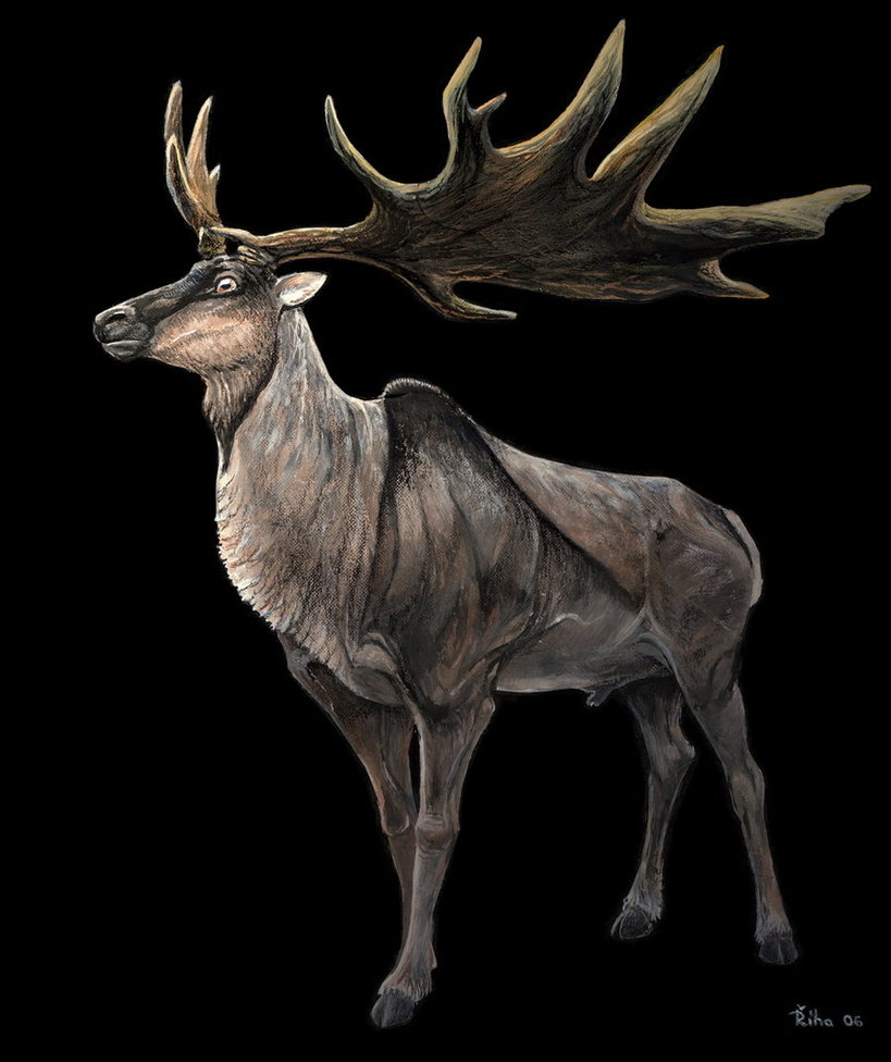 Megaloceros by Pavel