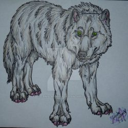 1017_dire wolf_canis-simensis