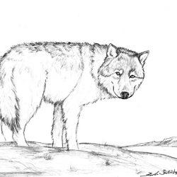 1020_dire wolf_spirit_wolf