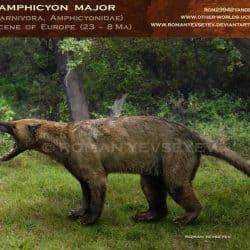 1026_amphicyon_roman_yevseyev