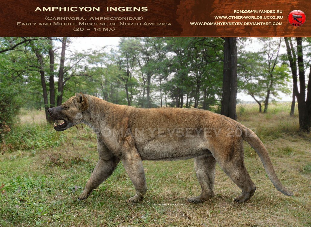 Amphicyon by Roman Yevseyev