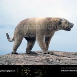 1029_amphicyon_roman_uchytel