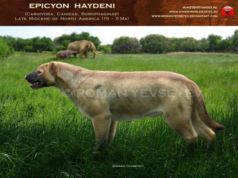 Epicyon by Roman Yevseyev