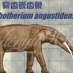 1045_gomphotherium_chen_yu