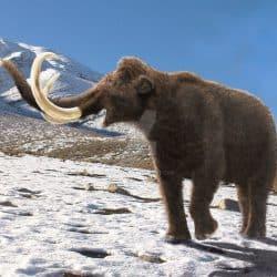 1055_mammuthus (woolly mammoth)_mehdi_nikbakhsh
