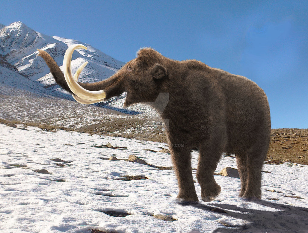 Mammuthus (Woolly Mammoth) by Mehdi Nikbakhsh