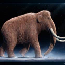 1056_mammuthus (woolly mammoth)_vlad_konstantinov