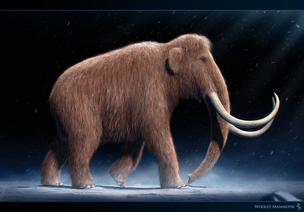 Mammuthus (Woolly Mammoth) by Vlad Konstantinov