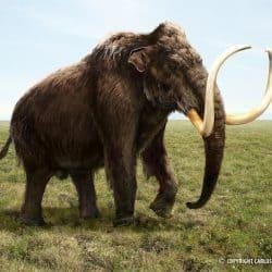 1057_mammuthus (woolly mammoth)_kaek_starkiller