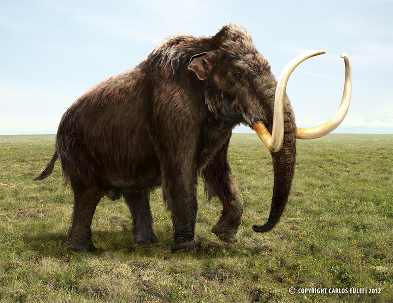 Mammuthus (Woolly Mammoth) by Kaek Starkiller