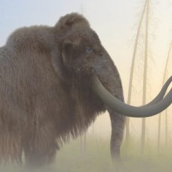 1058_mammuthus (woolly mammoth)_philip