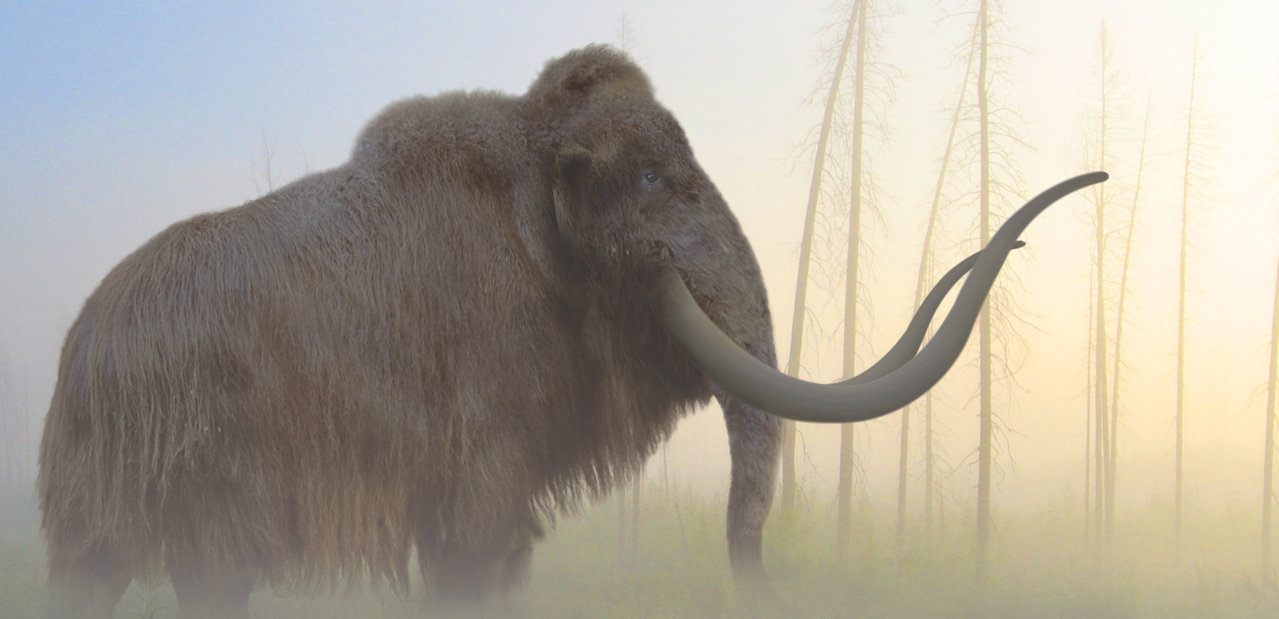 Mammuthus (Woolly Mammoth) by Philip Edwin
