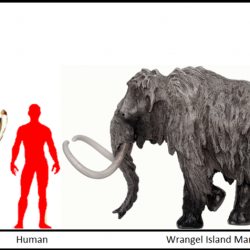 1059_mammuthus (woolly mammoth)_homero
