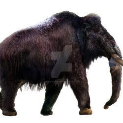 1060_mammuthus (woolly mammoth)_daniel_reed