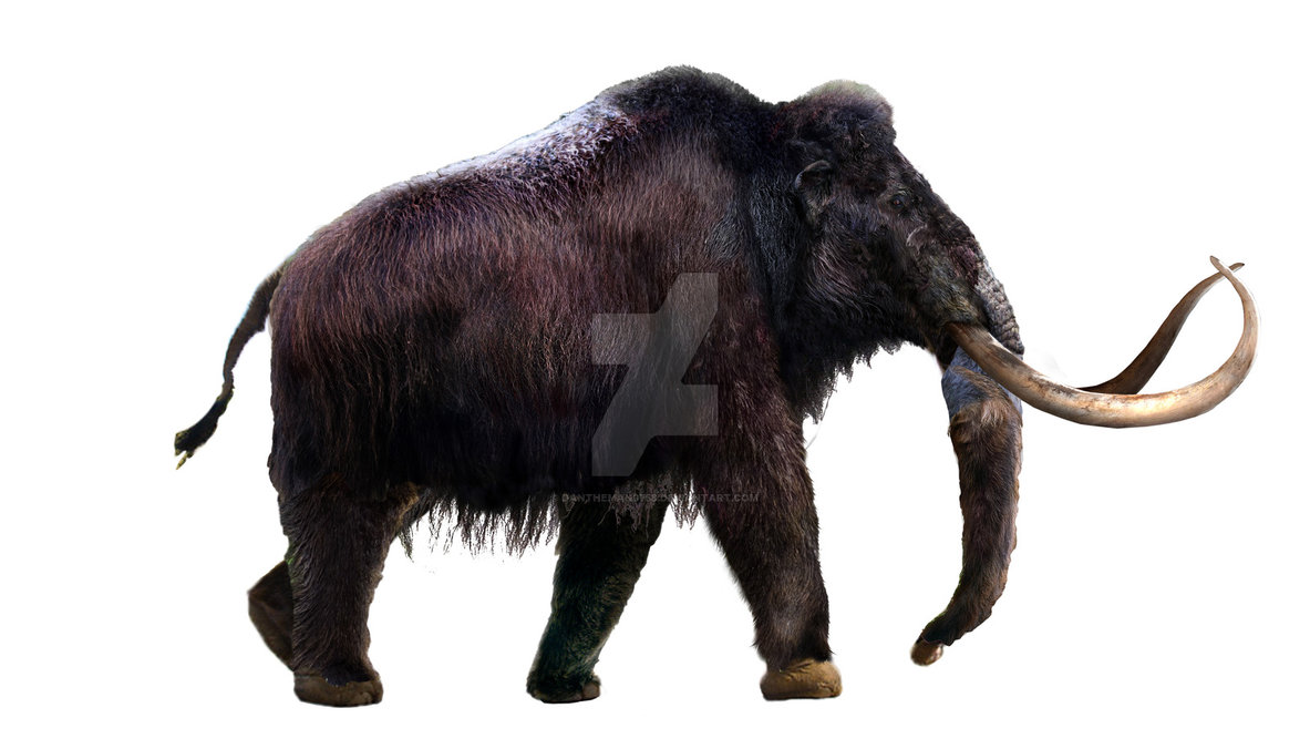 Mammuthus (Woolly Mammoth) by Daniel Reed
