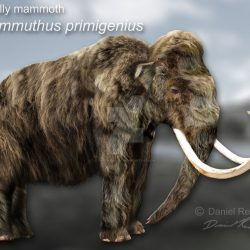1061_mammuthus (woolly mammoth)_daniel_reed