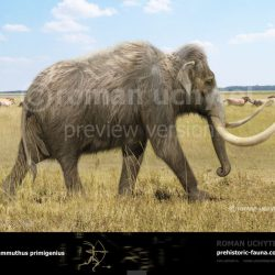 1062_mammuthus (woolly mammoth)_roman_uchytel