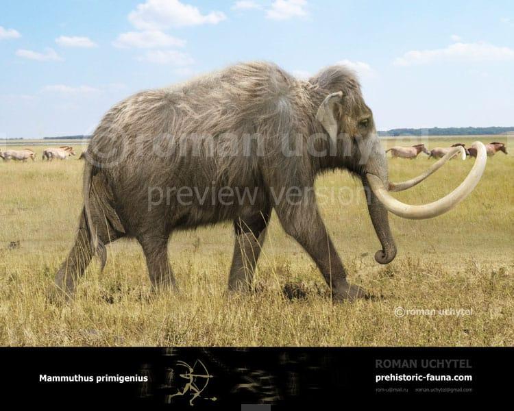 Mammuthus (Woolly Mammoth) by Roman Uchytel