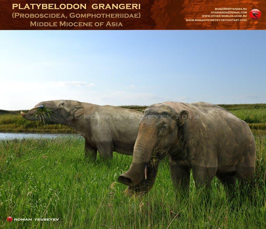 Platybelodon by Roman Yevseyev