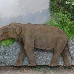 1079_platybelodon_sameerprehistorica