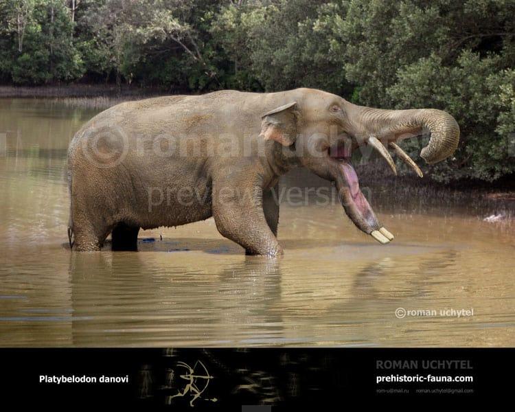 Platybelodon by Roman Uchytel