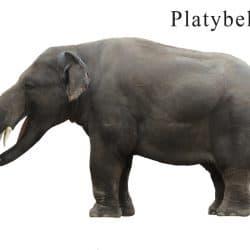 1082_platybelodon_pookyhorse