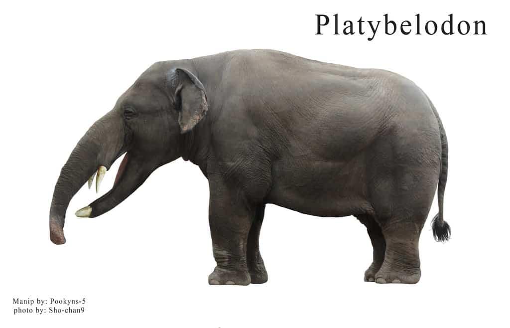Platybelodon by pookyhorse