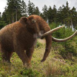 1085_mammut (mastodon)_mehdi_nikbakhsh