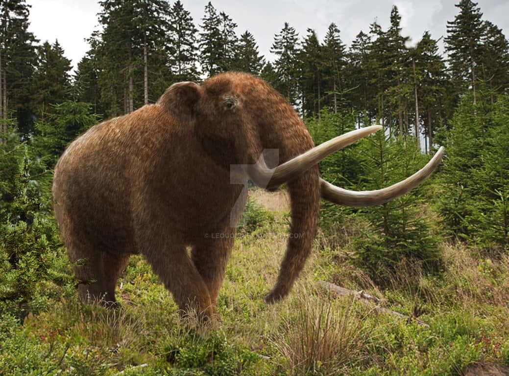 Mammut (Mastodon) by Mehdi Nikbakhsh
