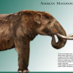 1086_mammut (mastodon)_daniel_reed