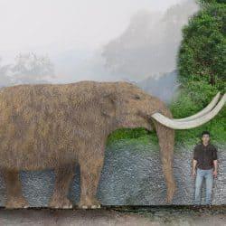1087_mammut (mastodon)_sameerprehistorica