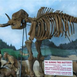 1088_mammut (mastodon)_phyllis