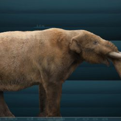 1089_mammut (mastodon)_sergio_de_la_rosa_martinez