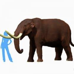 1090_mammut (mastodon)_nobu_tamura