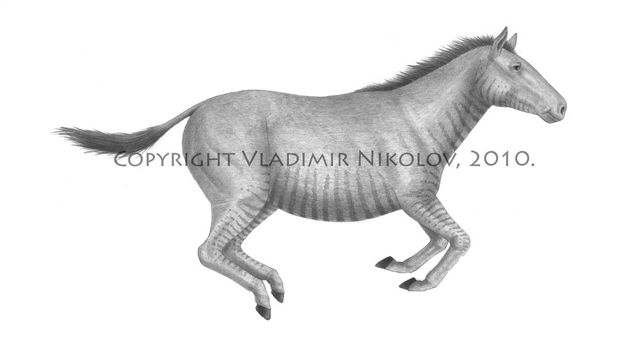Pliohippus by Vladimir Nikolov