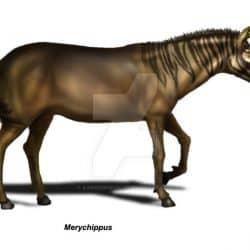 1094_merychippus_eduardo