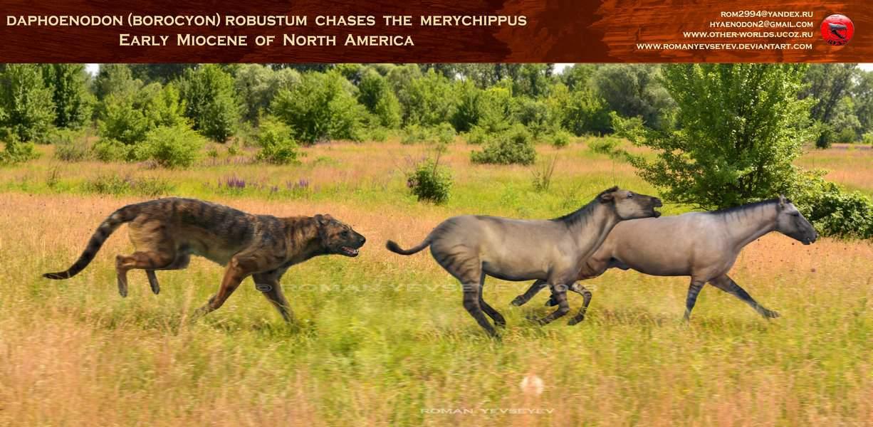 Merychippus by Roman Yevseyev