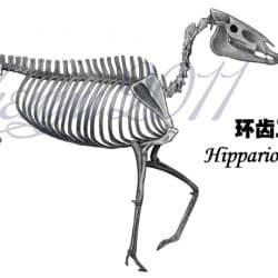 1099_hipparion_chen_yu