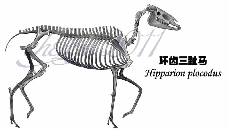 Hipparion by Chen Yu