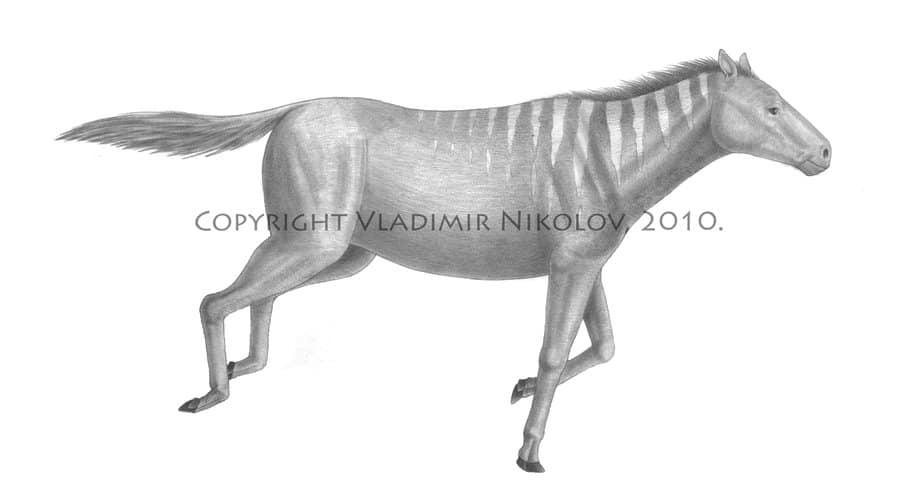 Mesohippus by Vladimir Nikolov