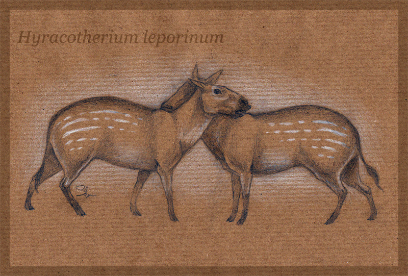 Hyracotherium by Sophie