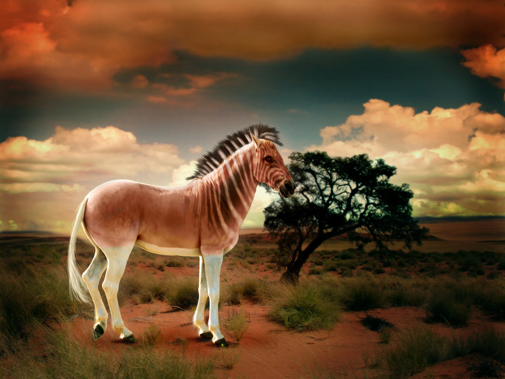 Quagga by Kristen
