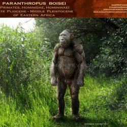 1124_paranthropus_roman_yevseyev