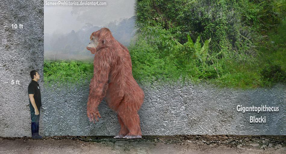 Gigantopithecus by SameerPrehistorica