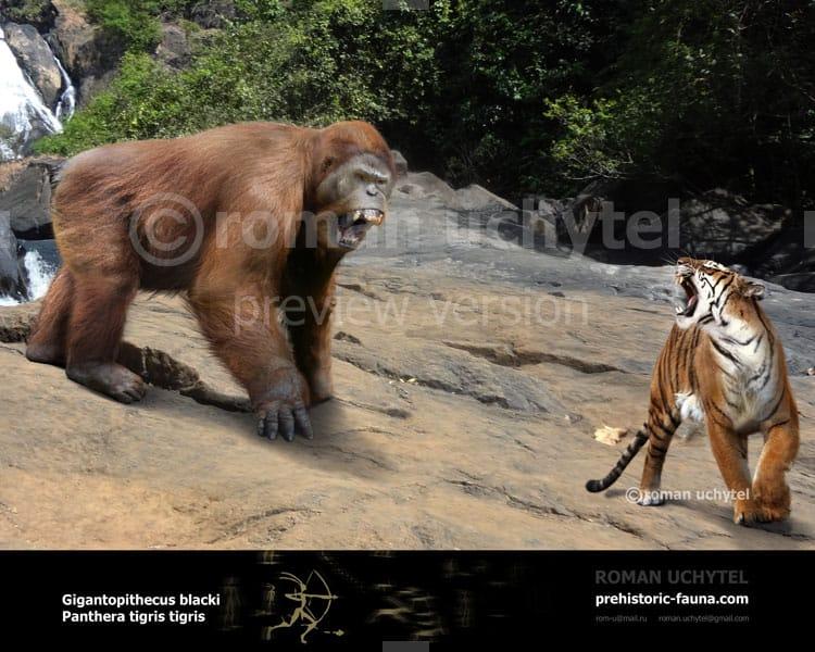 Gigantopithecus by Roman Uchytel