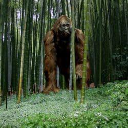 1137_gigantopithecus_frank_lode