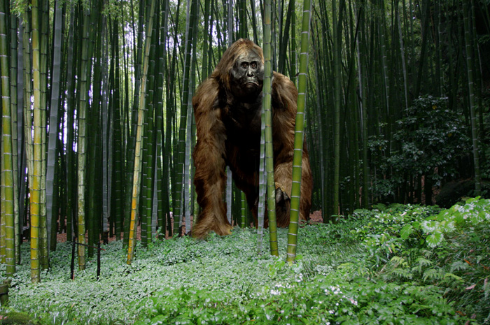 Gigantopithecus by Frank Lode