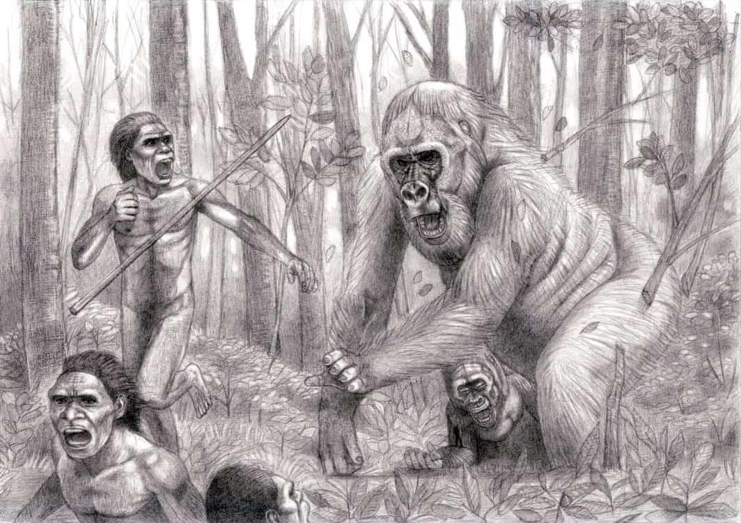 Gigantopithecus by Jagroar