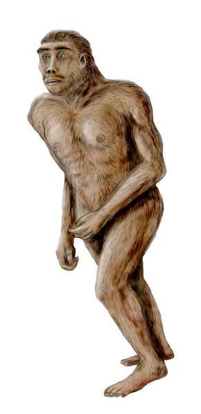 Australopithecus by Nobu Tamura